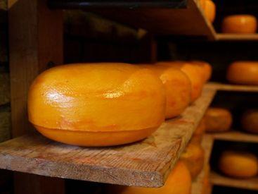 【チーズの製造補助】コツコツ&モクモク作業!がっつり稼ぎたい方におすすめ♪1年後には直雇用も可能!!マイカー&バイク通勤も◎