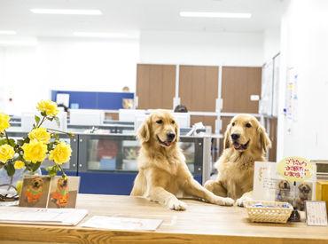 可愛いセラピードックのいる施設♪ 仕事の疲れも癒されますよ*゜ 気軽にご応募くださいね◎