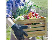 野菜の収穫、出荷作業まで農協を補助する農業に携わっていただくお仕事です。 ★U・Iターン大歓迎★