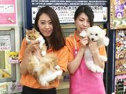 ≪可愛い動物たちがいっぱい♪≫ わんちゃん、ねこちゃん…人気の動物たちがたくさん★可愛い姿に癒されますよ◎