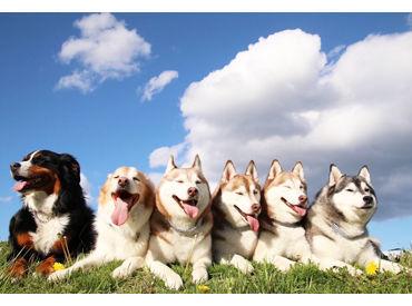 応募条件はあるの? 事務作業のほかに犬・猫のお世話もお願いするので、もともと犬・猫が好きな方を歓迎します♪
