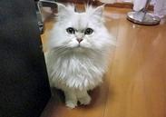 当社の看板にゃんこd(=^・ω・^=)b電車やバスの当社宣伝広告にも使われているモデル猫です★