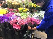 \未経験OK!!/お花が好きな方必見★ はじめは簡単な作業から♪ あなたの出来ることから慣れていきましょう!