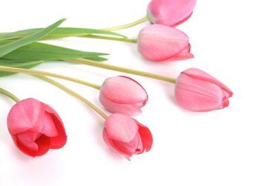 「球根を植える⇒お水をあげる⇒花の収穫をする etc』普段味わうことの出来ないレアな体験をしてみませんか?※画像はイメージ