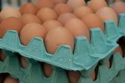 丸くてコロコロ! かわいい卵さん!