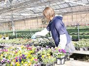 野菜・花苗の園芸作業をお願いしています。休憩は、午前/昼/午後の3回。余裕を持ってお仕事できる環境をご用意しています。