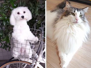 わんちゃん・猫ちゃんを守る当院で 一緒にお仕事しませんか♪ 「ペットは飼ったことがない...」という方もスタートできます◎