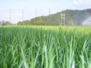 芝生って気持ちいいんです.+* グラウンドは生き物…日によって手入れの仕方も変わります♪ どんどん愛着も湧いてきますよ♪
