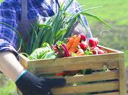 あの大型農業協同組合の<JAおとふけ>での登録だから安心♪ 勤務可能な農家の数も多いから、通いやすい場所を紹介可能!!