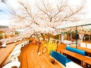 春の期間限定staff大募集♪ お洒落な絶景スポットで働くチャンス!