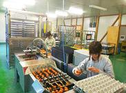 ☆卵を選別して健康なヒナをお客様のもとへ☆ いきものに関して詳しくない、お仕事未経験というスタッフさんが活躍しています♪