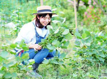 自然に囲まれたのどかな場所でオシゴト◎ 自然栽培の無農薬農業を行っています! ※写真はイメージです。