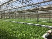 野菜の栽培から出荷までのお仕事になります!基本的には種まきや仕分けなど作業になります♪