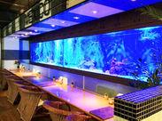<人と接することが好きな方歓迎★> カラフルな熱帯魚に、ライトアップされた水槽…お客様の特別な時間をサポート♪