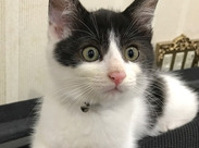施設で一緒に生活しているネコの サンタです。 すご〜く癒されます!施設のアイドルです♪