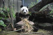園内には、パンダはもちろん、ホッキョクグマやアザラシなど、 人気の動物がいっぱいいます♪