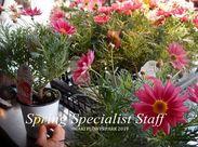 「このお花、カワイイですよね♪プレゼントにもいいですよ~★」などお客様と楽しく会話しながら働けますよ◎