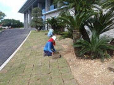 写真は芝張の作業風景です! 少しずつ丁寧に張りを行っていきます。 区画がキレイに完成した時には思わず感動してしまうかも…♪