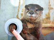 周りに水族館で働いている人はいますか?恐らく「NO」が大半★レア&楽しいバイト始めよう♪採用率UPの今、応募のチャンス!!