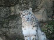 みんな大好き「多摩動物公園」♪動物好きさんにオススメ!憧れの場所でバイトしてみませんか?