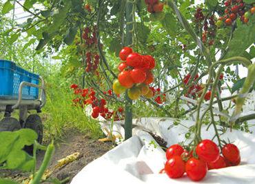 野菜を口にすれば、こだわりをきっとわかっていただけるはず。まだみやもと農園を知らない方は、ぜひ一度召し上がってください!