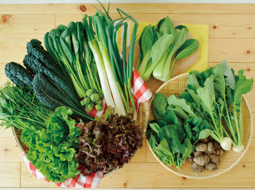 安心・安全の面で自分達が食べたくなる野菜を育てています!気になる方は、一度みやもと農園へお越しくださいね!