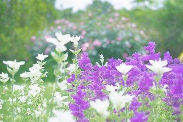<庭園が綺麗な施設>  園芸療法を行なっています☆ 敷地内で四季を感じられます!!
