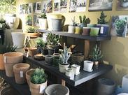 小さなお店だからこそ、お客様との繋がりが強く、毎日アットホームな雰囲気で働けるんです♪