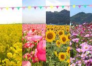 ポピー、ひまわり、コスモス… シーズンにあわせて様々な花が咲きます! 通勤で色々な変化が有って 日々の楽しみになりますね☆