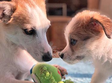 エサをあげたり、お掃除をしたり.. 犬たちの成長を見守るお仕事♪ 4人体制なので未経験者さんも安心!