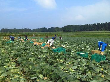 野菜の育て方のコツやおいしい調理法など 農家さんの知識も教えてもらえます!! 男女スタッフ、幅広い年齢層が活躍中◎