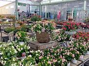 鉢花などを豊富に取り揃えている『ふらわーらんど』&たくさんの樹木や盆栽を展示・販売している『植木コーナー』の募集♪