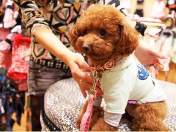 ★犬好きさん、大集合★ 華やかなお台場エリアでのお仕事! 可愛いワンちゃんたちに出会えます◎ 短期で働きたい方にも♪