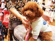 かわいいワンちゃんにもたくさん出会えます★<社割あり>あなたの愛犬へのプレゼントもお得にGET♪
