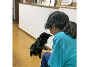 ↑↑写真のワンちゃんはあま市の施設で暮らす保護犬です♪ Wワーク/副業/主婦(夫)/中高年/シニア…皆さん大歓迎!