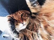 事務所の看板猫がお出迎え♪* お仕事から疲れて帰ってきても 少しじゃれてる間に癒されるんです…◎
