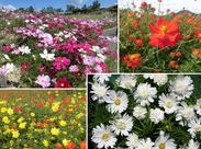 季節ごとに、丘一面に花が咲き誇ります! きれいな風景に癒されながらお仕事ができますよ♪