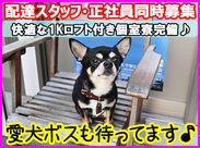 配達所のマスコット☆愛犬ボスが癒してくれます♪スタッフも優しく気さくな人が揃っています。一緒に楽しく働きませんか?