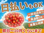身近な野菜・ミニトマトや玉ねぎの収穫をお手伝いしませんか?農業や家庭菜園に興味のある方にもオススメです★
