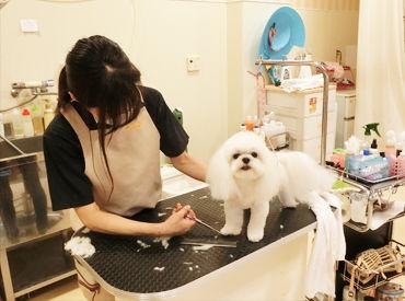 可愛いペット達の美容と健康を一緒にサポートしていきましょう♪*動物好きはみんな良い人♪だからスタッフも良い人ばかりです◎