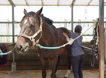 """【馬のお世話STAFF】\""""馬が好き""""きっかけはそれだけでOK!/未経験OK!馬の生活をサポートしませんか♪馬や乗馬に関する知識・経験は必要ナシ◎"""
