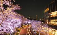 この時期は、ミッドタウン前の桜並木道も桜が満開!ロマンチックな夜のライトアップを眺めながら、仲間と楽しく働けます♪
