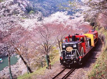 人気観光地「嵯峨野トロッコ列車」でのお仕事です!もうすぐ桜の季節♪幻想的な風景を楽しみながら、お仕事しませんか◎