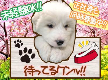 大型犬から小型犬まで犬種はさまざま★たくさんのかわいいワンちゃんたちと触れ合えます♪+*.゜