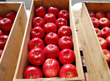 *゚+.*.。【秋といったら】*゚+.*.。 美味しい果物たちの出荷をお手伝い♪ あなたの力をぜひかしてください!!