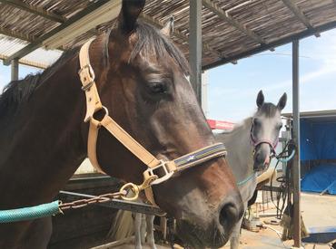 【イベントStaff】\高崎のレアバイト★乗馬の楽しさ一緒に広めよう♪/未経験OK!乗馬クラブの無料体験PR♪気になったらまずは連絡だけでもOK◎