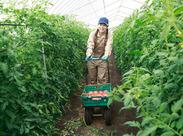 農業に興味のある方、この機会に短期のお仕事を始めませんか?北栄ファームは農作業全般に関わることが出来ます◎
