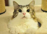 「見てください!このつぶらな瞳」 同世代が多く、みんなネコ好きなのですぐに馴染めます! 20代のスタッフが笑顔で活躍中♪