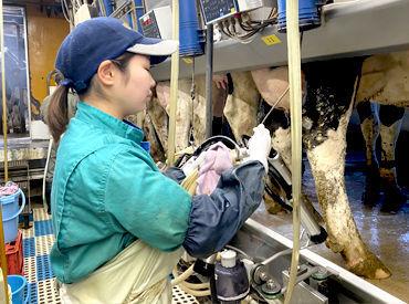 当牧場は清潔さに気を遣っており、牛舎も設備もいつもキレイにしています☆バイオガスプラントの導入で臭いも軽減しています♪