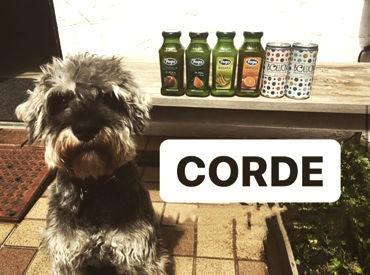 【コルドはペット同伴可のお店】写真は、看板犬の{アジェ君}♪+゜ 色んなワンちゃんも来店★ふとした時に目が合ってほっこり!